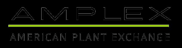 Amplex logo